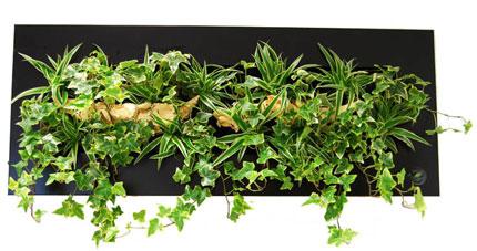 mur végétal déco